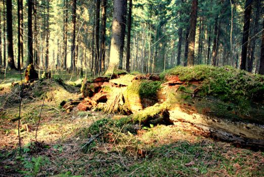 Forest series-Russian forest8 by takiostavim