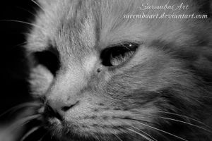 Face Of The Cat (monochrome) by SarembaArt