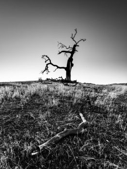 Death Tree by fistfulofneurons