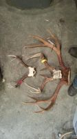 Whitetail and Mule Deer Antlers by Minotaur-Queen