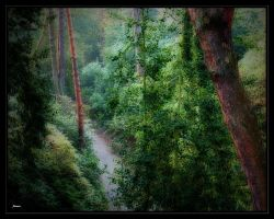 woodland pathway by awjay