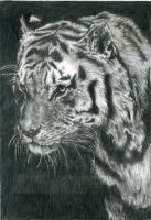 Portrait of a Tiger by 13SweetYuna13
