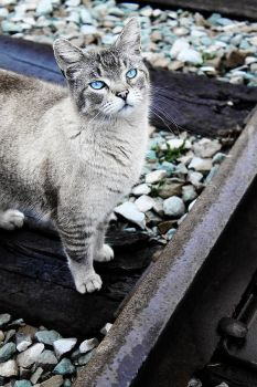 Cinders the Cat 2 by S-H-Photography