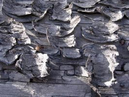 Wood texture 006 by AnnFrost-stock