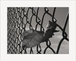Chain Link Fence by solodaddy