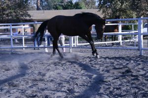 bay horse stock 27 by xbr0kendevotion