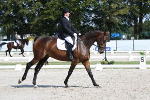 Outdoor Brabant Stock 32 by chronically