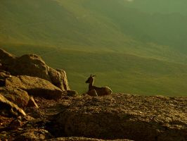 Sunrise Bighorn Sheep by yalanrei