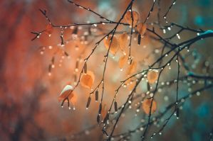 Beetween autumn and winter by Lura-Nik