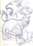 Cats by zenobia