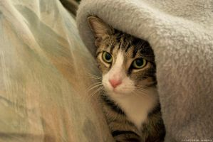 Ozzy under the blanket I by rockmylife