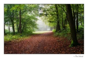 Path. by Phototubby