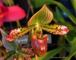 Orchid Show 2015 no.15 by Foozma73