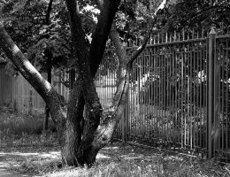 Tree and fence by saltov-man