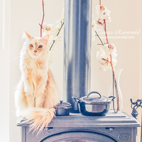 Stove kitty by TammyPhotography