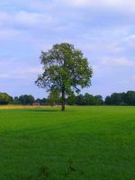 tree in the grass by pwghost