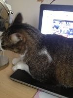 My Cat Laying on the laptop by AkumaBlazeStar