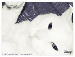 Snowy 5-14-2003 - 12-2-2008 by snwgames
