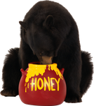 brown bear eats honey PNG image by Alwa3d
