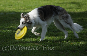 DiscDogs Local Tournament 1 by Deliquesce-Flux