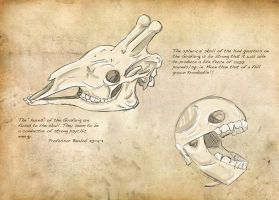 Field Guide: Pg. 3 Skulls by CasteelArt