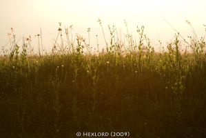The Field - III by hexlord