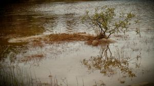 a tree in the water by windinthehair