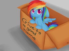 my little Dashie by chibimlp-lover