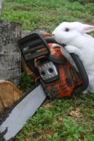 Chainsaw Bunny by Dead-Raccoons