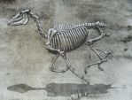 Horse Skeleton by P4LE-HORS3