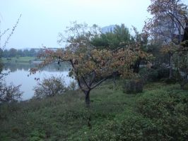 Autumn exploring 2 by Laura-in-china