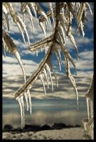 Ice Trees by JS2010