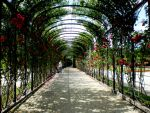 Path of Roses by Angelvila