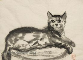 Young Cute Cat - ink by Oksana007