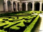 Boxwood Garden I by MrWootton
