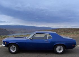 Misty Mustang at the Gorge by Momofbjl
