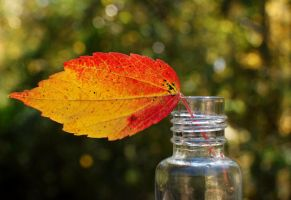 Autumn in a Bottle by jennalynnrichards