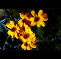 Copper Canyon Daisies by Vividlight