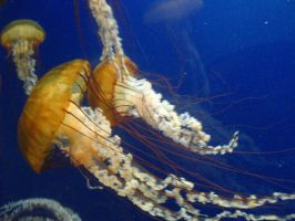 jellyfish by looking4myleopard