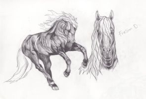 Friesian Study - Final by Red-Red-Panda