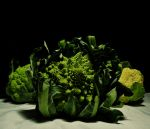 Romanesco brocoli by Yourmung