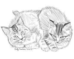 Al's Maine Coon Kittens by OtakuEC