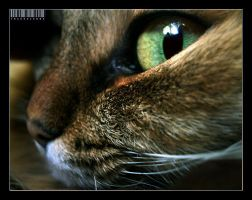 My Cat by StacyD