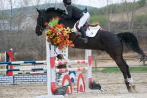 Show Jumping - 9 by Silver-Stock-Images