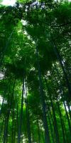 Bamboo Forest II by frenchbear