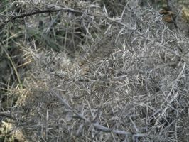 shrubberies dried by Cippman