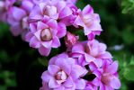 Pinkness by dannypyle