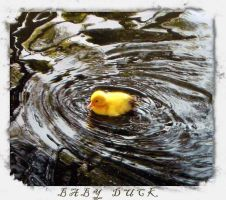 baby duck by ThoRandMorgaine