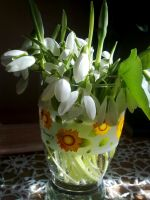 snowdrops by ange95
