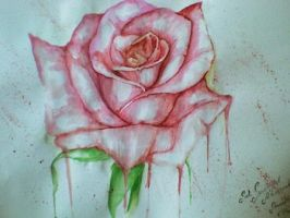 Rose by AmyPond11